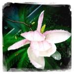 Spring, Springtime, Maine, flower