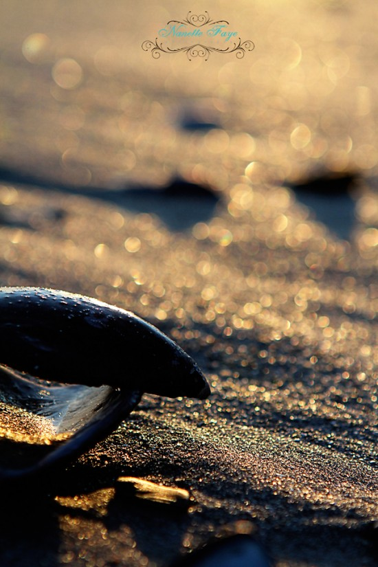 Maine coast, seashells, ocean, photography, Nanette Faye Photography, winter ocean