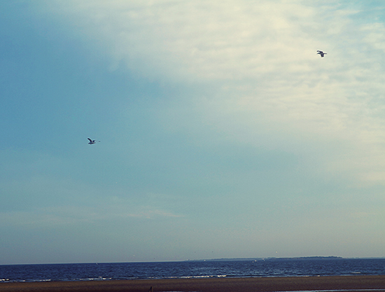 Maine coast, ocean, photography, spiritual, Nanette Faye Photography, birds