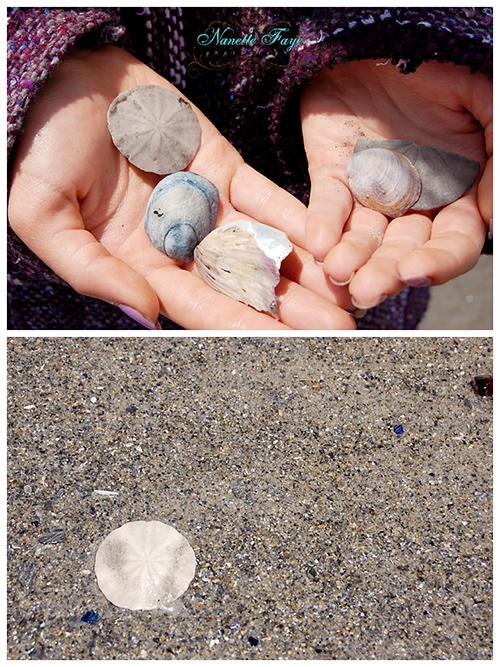 Maine coast, sea, sea shells, beach, beachcombing, Higgins Beach, sand dollars, shells, Nanette Faye Photography