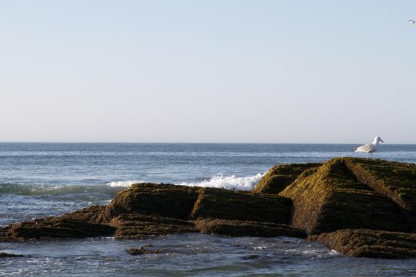 Maine, Maine coast, ocean, Maine sunrise, seagull, Southern Maine coast, Southern Maine photographer, Nanette Faye photography