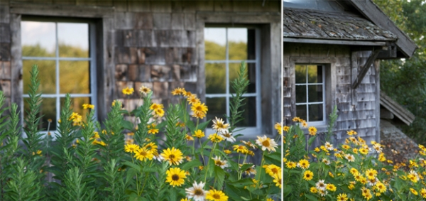 flowers, shed, farm, farmhouse, yellow, Maine, Maine farmhouse, Maine photographer, Nanette Faye Photography